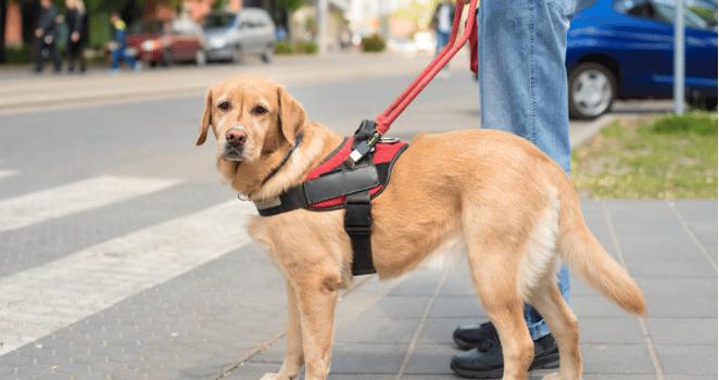 Comment apprendre reste à son chien