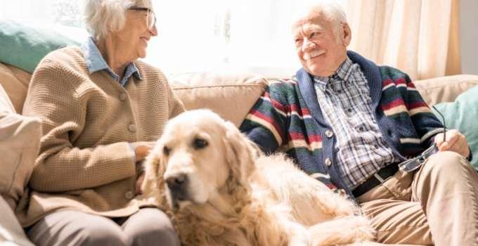 Adopter un chien pour personne âgée