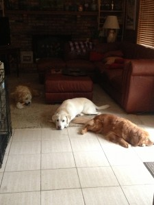L to R: Gracie, Sora & Max Happily relaxing in the cool house during the blazing summer 2015!