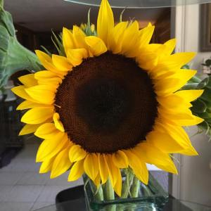 Sunflower.Hermine