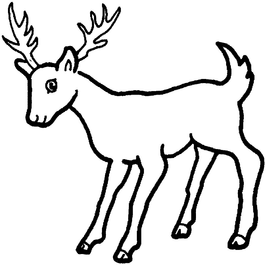 deer coloring pages animals cooloring com