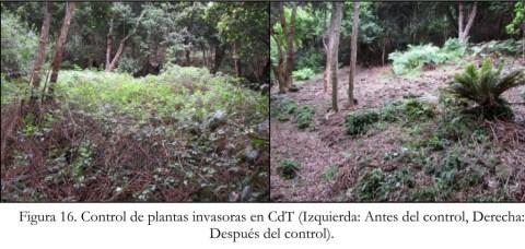 Foto 1 a y b_Antes y después del control