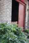 Eingangs-Chilli