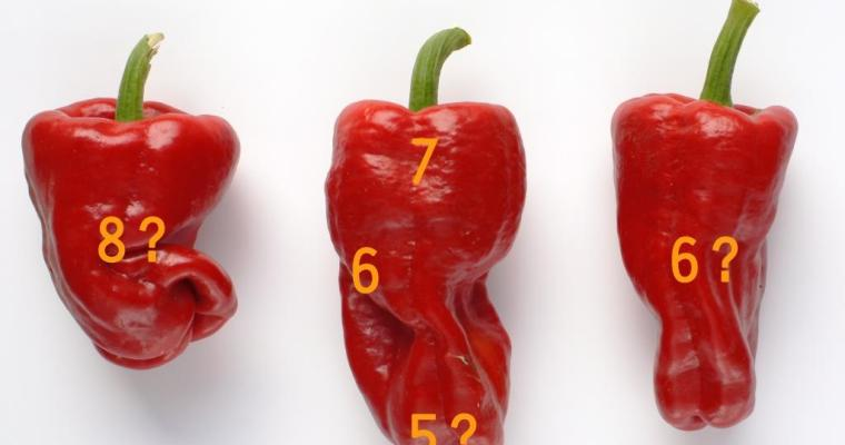 Chilli Misconceptions 5: Heat Level X