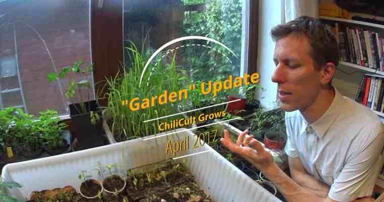 Garden Update, April 2017
