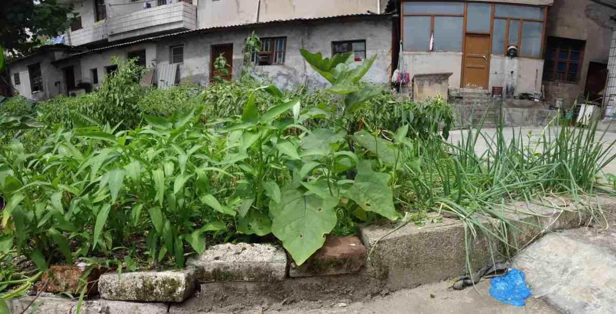 Gemüsebeet / Vegetable Patch in Hunan
