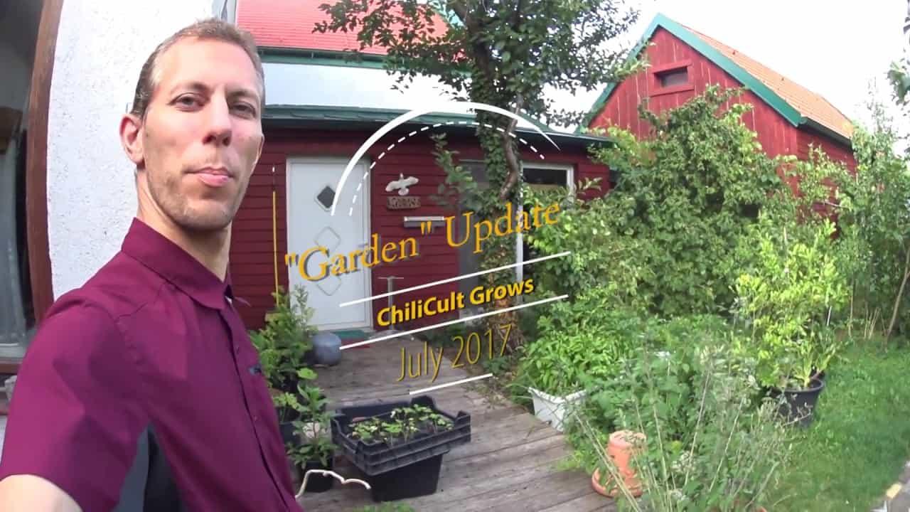 Garden Update, July 2017