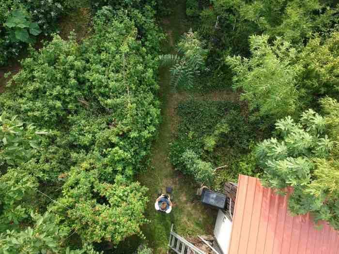 DJI Gartenblick auf Beeren