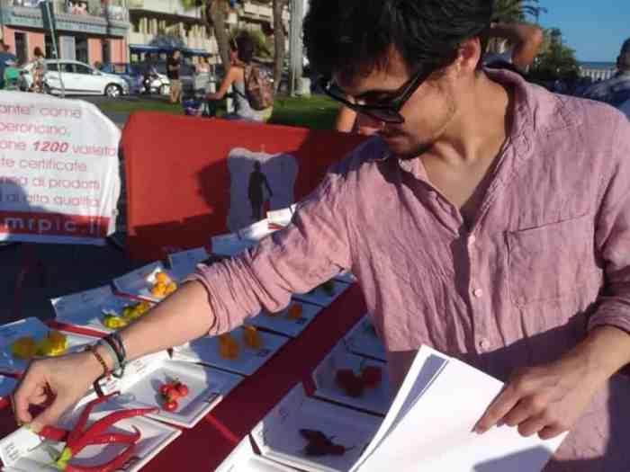 Mario Zamprotta von der World Chilli Alliance bei der Begutachtung der Sorten in der Chilli-Weltrekordausstellung beim Viareggio Peperoncino Day 2019. Bild copyright Mr PIC®, genutzt mit deren Erlaubnis.