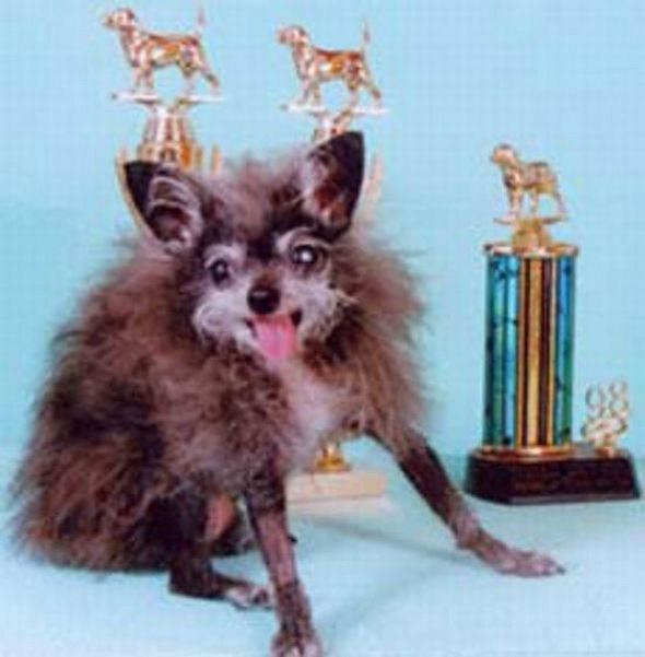 Ugliest Dog in the  World Contest Winner