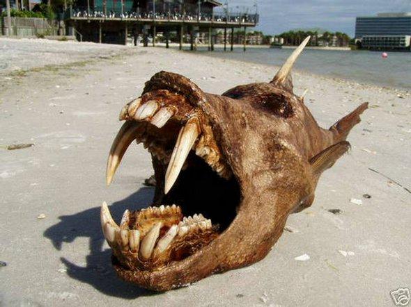 weirdest creatures ever 07 in 5 Weirdest Creatures Ever Found