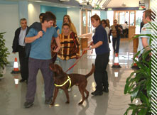 drugs search dog training