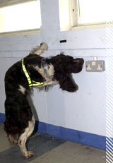firearms and explosive detector dogs
