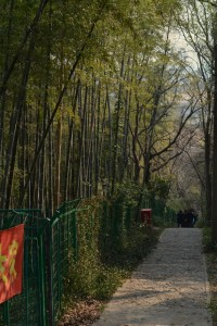 China, Shanghai, Sheshan hill, Bamboo