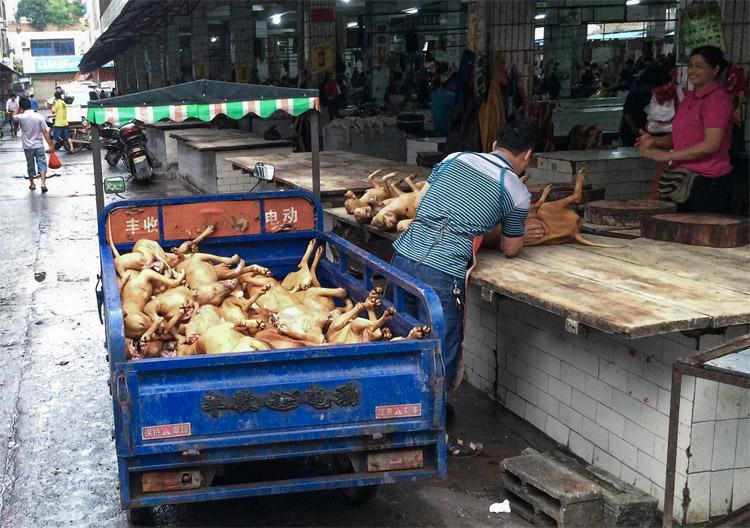 yulin, crudeltà sugli animali