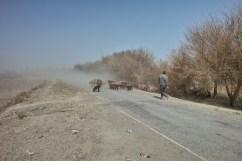 Schafherde in Xinjiang