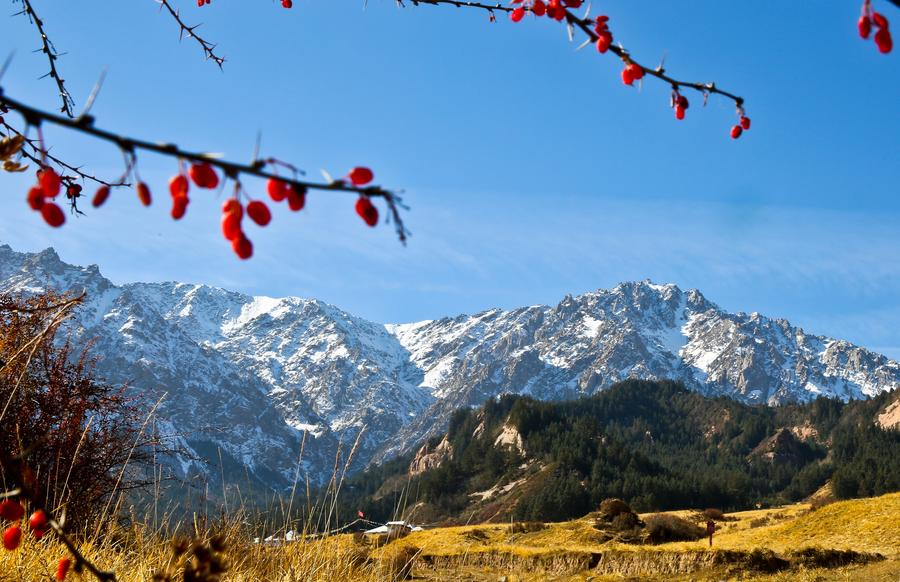 Autumn scenery in Qilian Mountains[1]- Chinadaily.com.cn