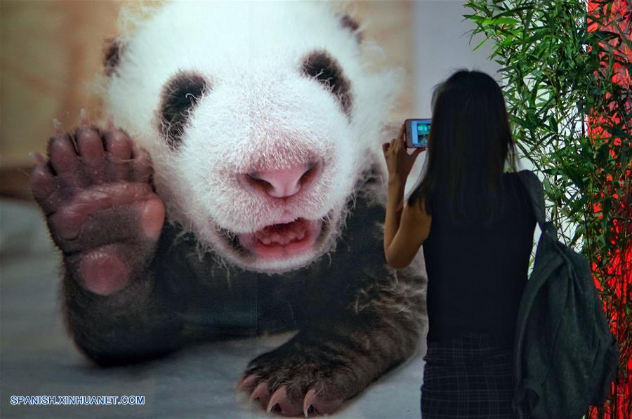 Comienza en Beijing semana de cultura de panda gigante