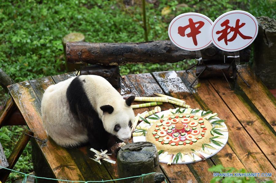 Panda longeva en cautiverio disfruta de banquete por Festival de Medio Otoño