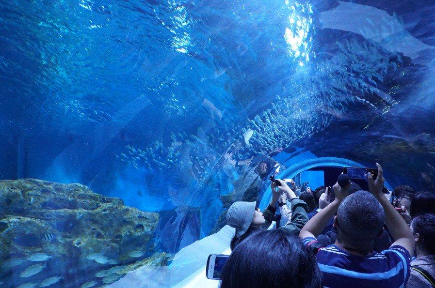 El acuario construido a mayor altitud del mundo abre al público en noroeste China