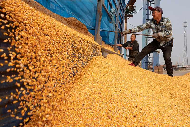 """Provincia conocida como el """"granero de China"""" apunta a producción de cereales de 75 millones de toneladas en 2021"""