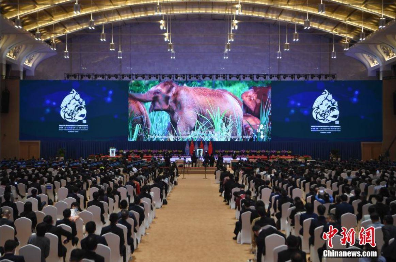 COP15 se inaugura en China con la civilización ecológica como centro de atención