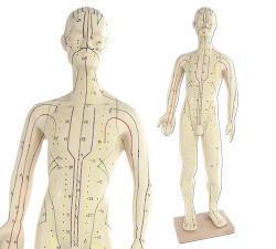 Menschliche Akupunkturmodelle