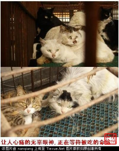 Chinese Restaurant Serving Cat Meat