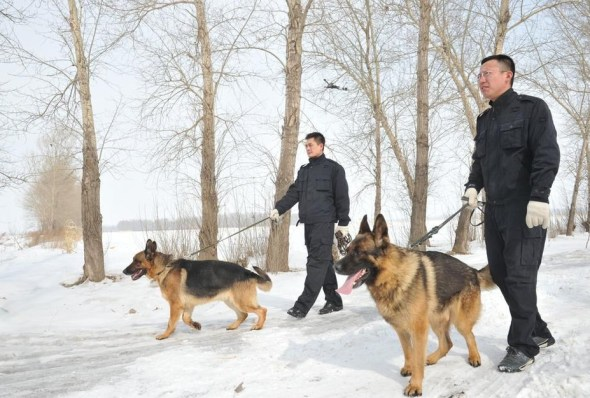 Chinese police and police dogs searching for a baby in the snow.