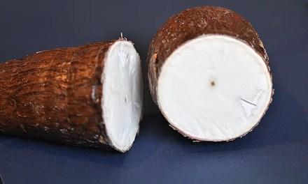 Les chinois se lancent dans le manioc à Madagascar