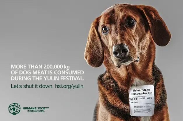 Viande de chien, le CIIC fustige les protestations occidentales