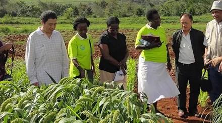 Sécurité alimentaire : partage d'expériences entre la Chine et l'Afrique
