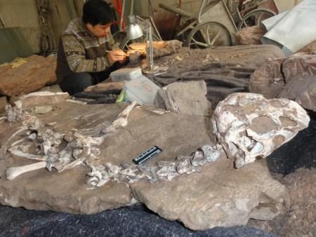 dinosaure-decouvert-tongtianlong-limosus-11-1