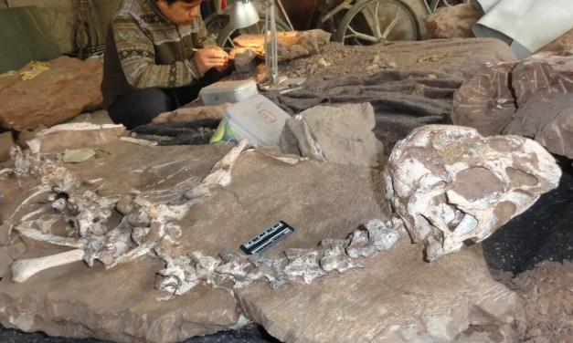 Nouvelles découvertes d'oeufs de dinosaures au Guangdong