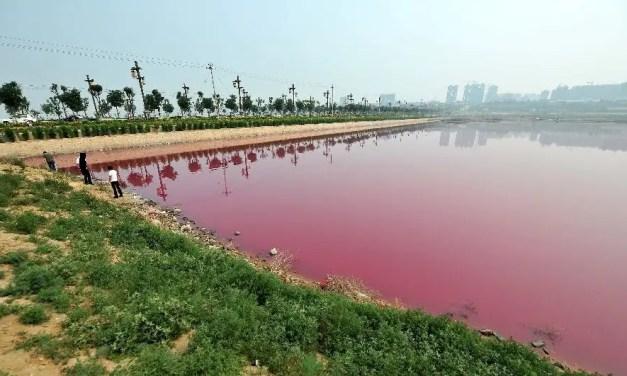 Le lac rose de Yuncheng