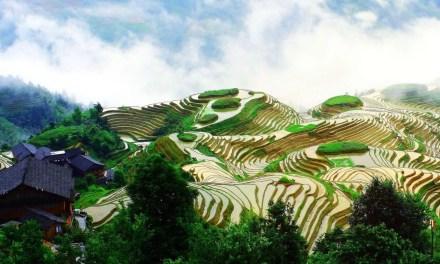 La Chine saluée pour sa protection du patrimoine agricole