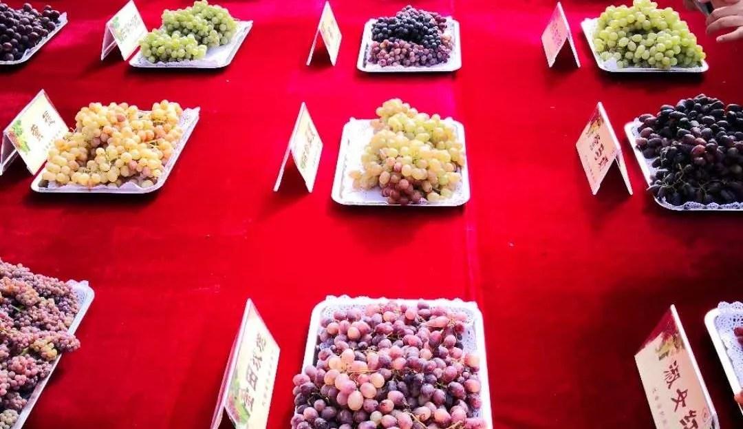 27ème édition de la fête des raisins de la Route de la soie