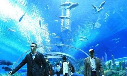 Le produit océanique brut en hausse