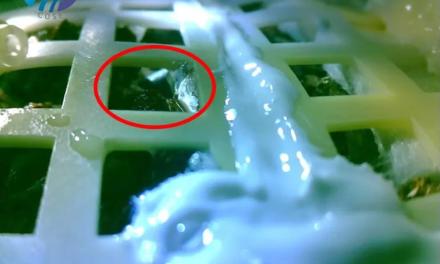 Les chinois auraient fait pousser du coton sur la Lune