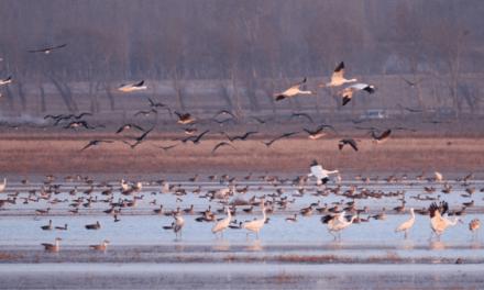 Restauration écologique du Lac Wolong  par Biotope