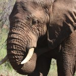 300 objets en ivoire saisis à Tianjin en 2019