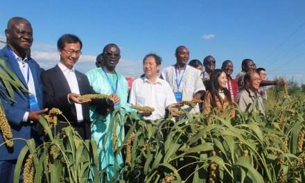 Des experts venus de Chine renforcent les capacités des agriculteurs