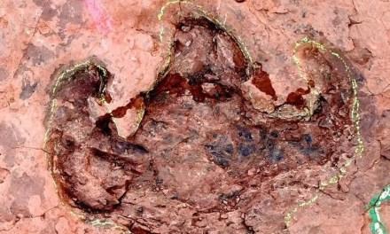 Découverte de plusieurs centaines d'empreintes de dinosaures au Fujian