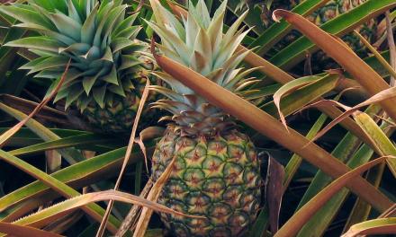 La Chine interdit l'importation de l'ananas de Taïwan