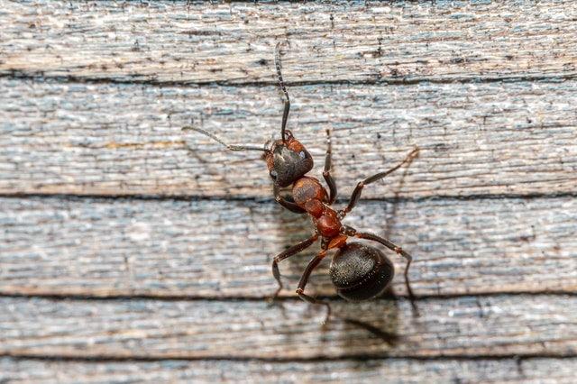 家里有蚂蚁/蚊子/蟑螂怎么办?美国10大害虫防治攻略