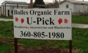 nongc e1592687143124 - 西雅图周边摘草莓4大农场推荐 草莓季节到啦