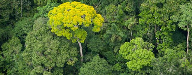 Inspiration – Equador Tree Planting One Day Record