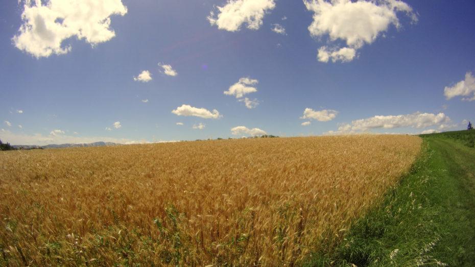 Il paesaggio collinare tra Fornovo e Costamezzana.