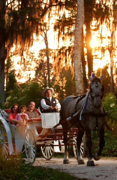 horse-drawn carriage Walt Disney World