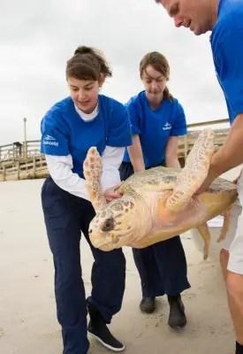 20140108_Canaveral Sea Shore Turtle Release_10 (1)